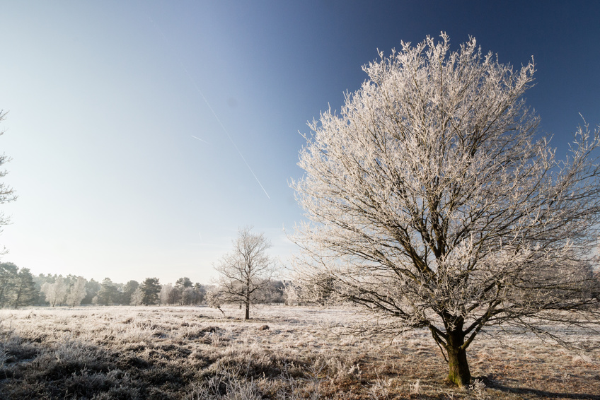 Winterlandschaft in Bispingen