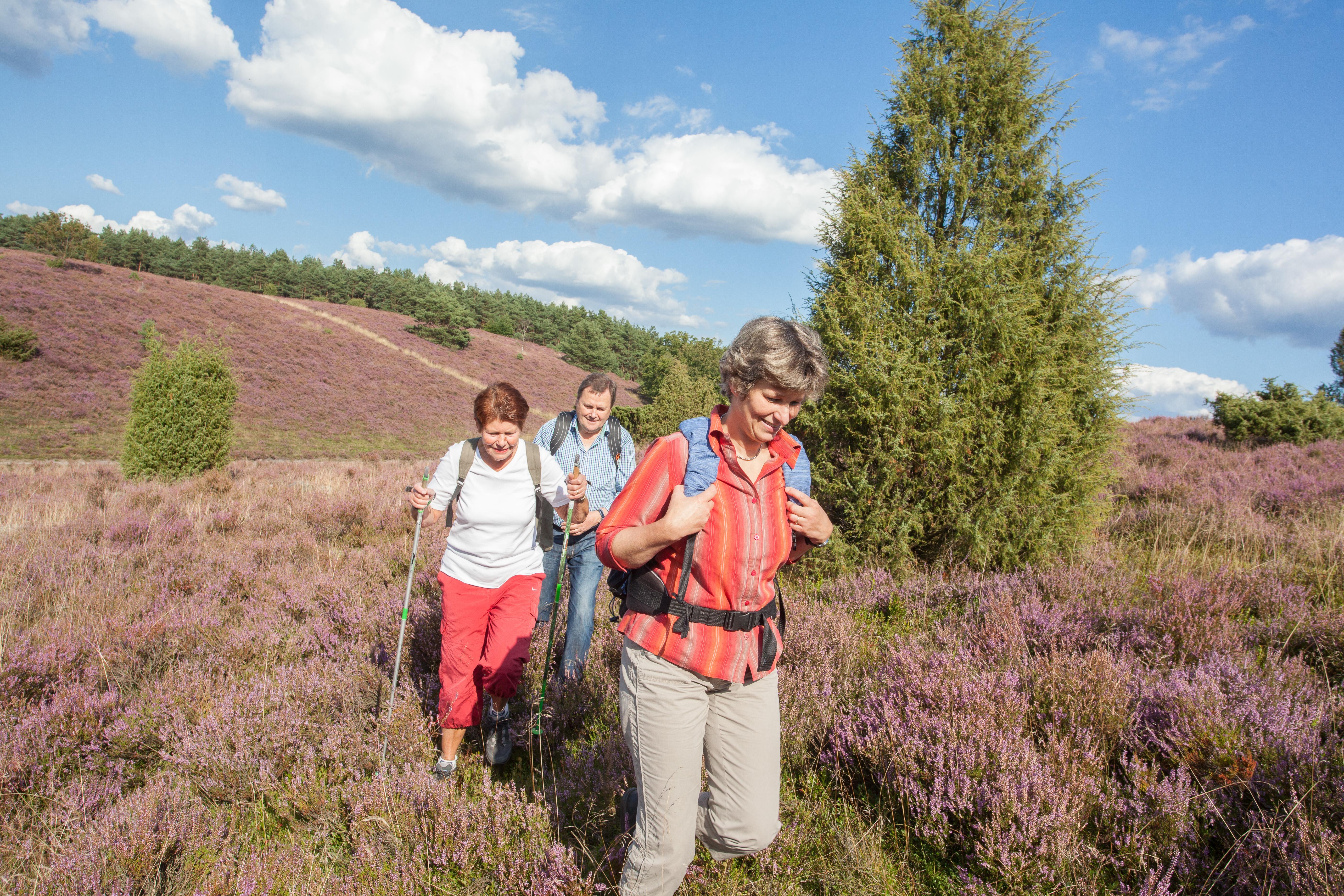 Wandern In Bispingen Lünerburger Heide Wegenetze Heidschnuckenweg